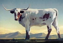 Ed Mell Longhorns 10 x 15, Archival Pigment Print $450.00