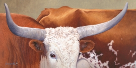 LONGHORN BULL Limited to 75 24 x 48 inches $1300 Open edition: 18 x 36 inches $790 14 x 28 inches $575